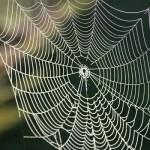 کشف دنیای ناشناخته حشرات به کمک تار عنکبوتها