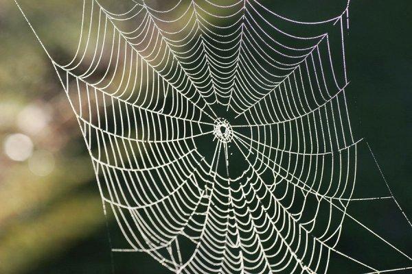 Photo of کشف دنیای ناشناخته حشرات به کمک تار عنکبوتها