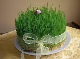 تصویر از طریقه آماده کردن سبزه عید
