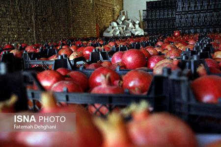 Photo of برداشت بيش از 18 هزار تن انار از باغات ميبد