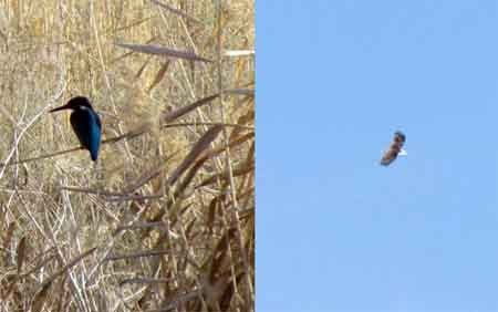 تصویر از مشاهده ماهیخورک و عقاب دریایی دم سفید برای اولین بار در یزد