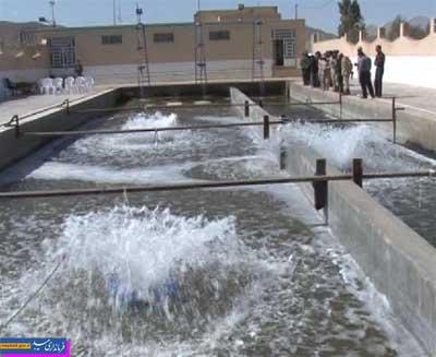 تصویر از اجرای طرح ویژه پرورش ماهی در پادگان نبی اکرم میبد