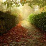 در کوچه باغ شعر / اشعاری از شاعران میبدی