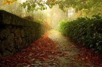 تصویر از در کوچه باغ شعر / اشعاری از شاعران میبدی