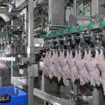 تولید سالیانه ۵۶ هزارتن گوشت مرغ در استان یزد