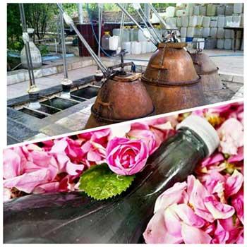 تصویر از پیش بینی برداشت بیش از ۱۱۵ تن گل محمدی از باغات استان یزد