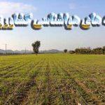 توصیه های  هواشناسی کشاورزی به کشاورزان و دامپروران
