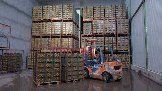 تصویر از ذخیره سازی بیش از ۹۰ درصد سهمیه تعیین شده میوه استان یزد برای توزیع در بازار