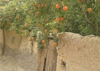 صدور مجوز ساخت و ساز تا ۱۵۰ متر مربع در باغات میبد امکان پذیر شد
