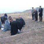 ۹ هکتار از اراضی میبد، زیر کشت زعفران است