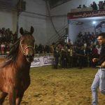 هدف برگزاری جشنواره اسب حمایت از این صنعت در میبد است