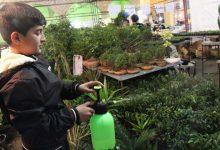 Photo of تصاویری از برگزاری نمایشگاه گل و گیاه در میبد