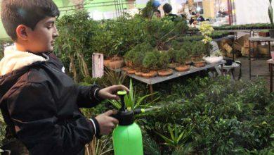 تصویر از تصاویری از برگزاری نمایشگاه گل و گیاه در میبد