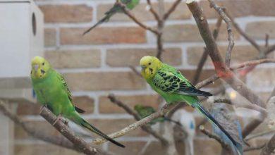 تصویر از باغ پرندگان میبد افتتاح شد