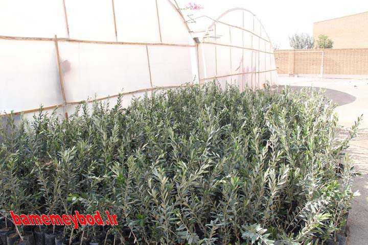 آغاز اجرای طرح هر شهروند یک درخت جدید