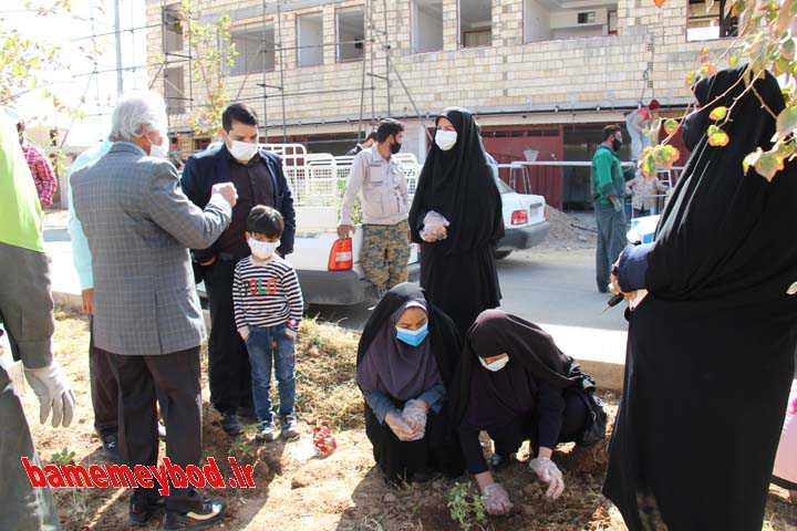 کاشت نهال به دکتر محمد آقایی نخستین شهید سلامت میبد و صدیقه پهلوان شمسی تنها بانوی شهیده میبد