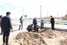 تصویر از مراسم نمادین کاشت نهال در بفروئیه میبد برگزار شد