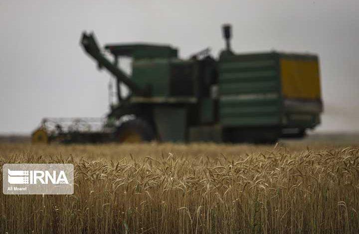 خودکفایی در تولید گندم