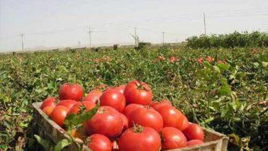 مشاوره رایگان کشاورزی
