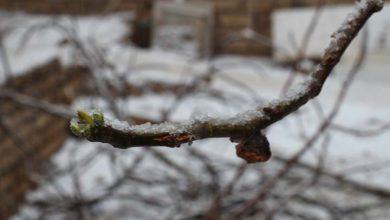 بارش برف در میبد